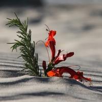 pismo-beach-small